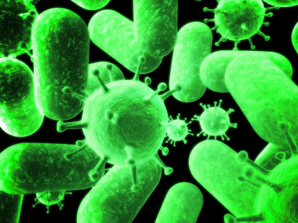 Gut bacteria and health