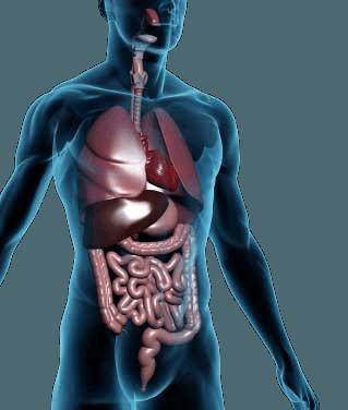 The 4 r's of gut healing