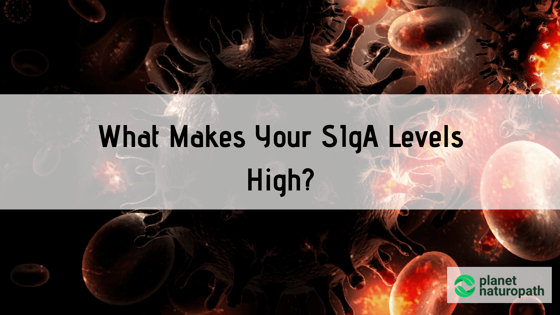 What-Makes-Your-SIgA-levels-Hig