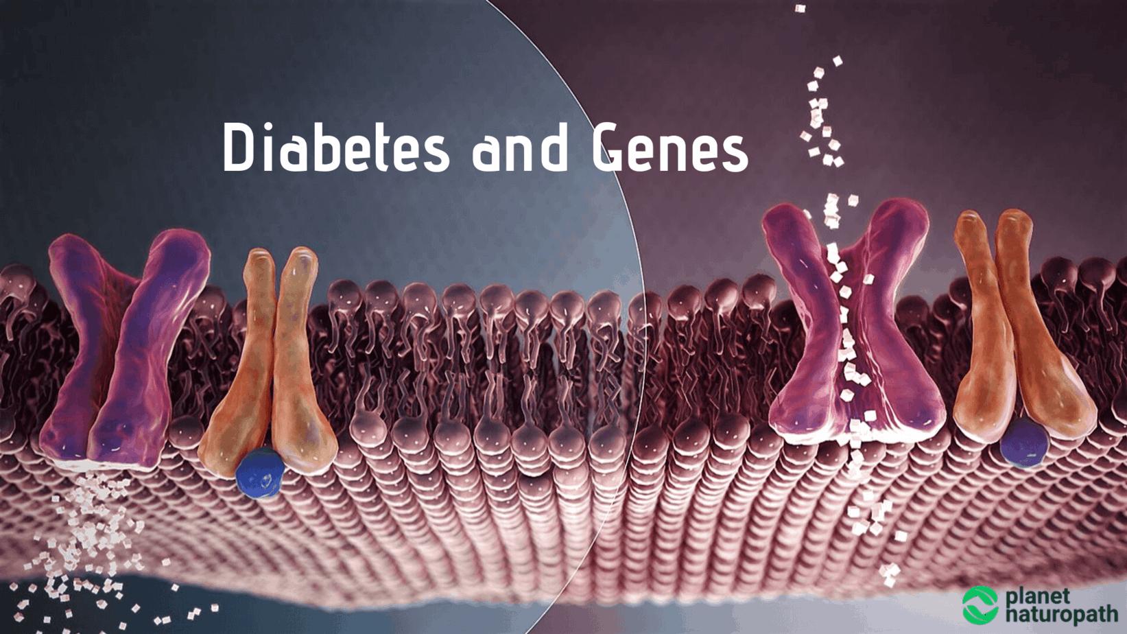 Diabetes-and-Genes