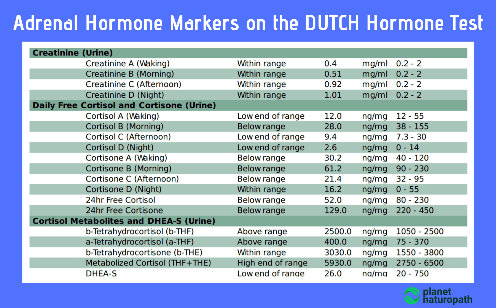 Adrenal-Hormone-Markers-on-the-DUTCH-Hormone