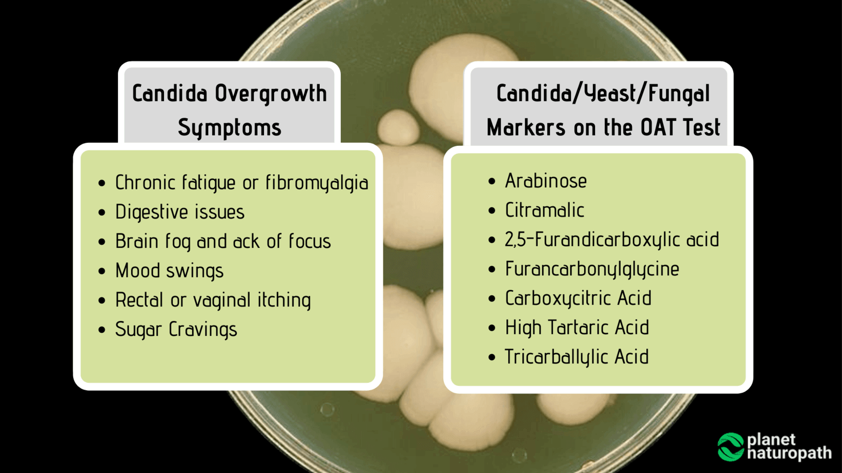 Candida-and-Fungal-Markers-on-the-OAT-Test