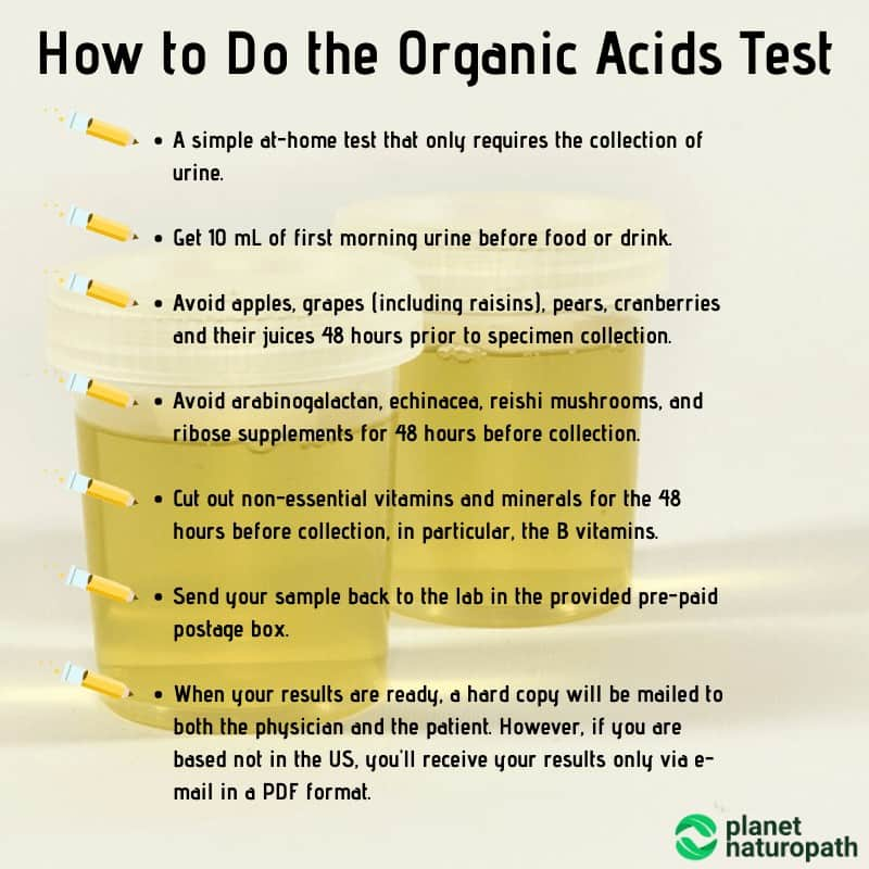 How-to-Do-the-Organic-Acids-Test