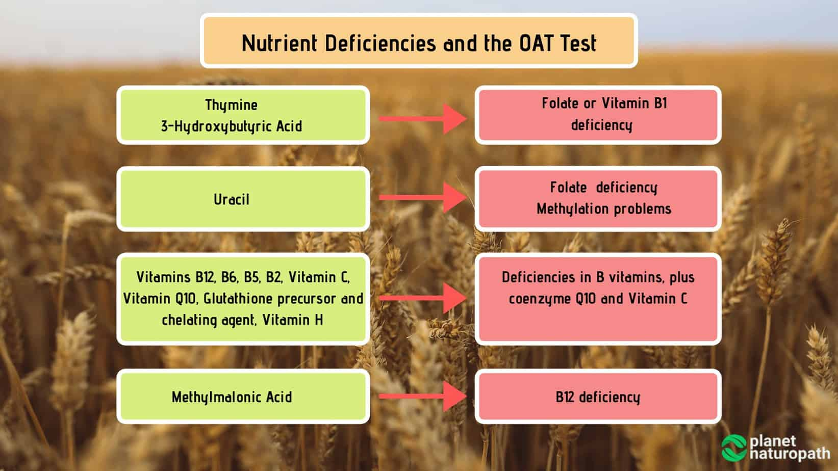 Nutrient-Deficiencies-and-the-OAT-Test