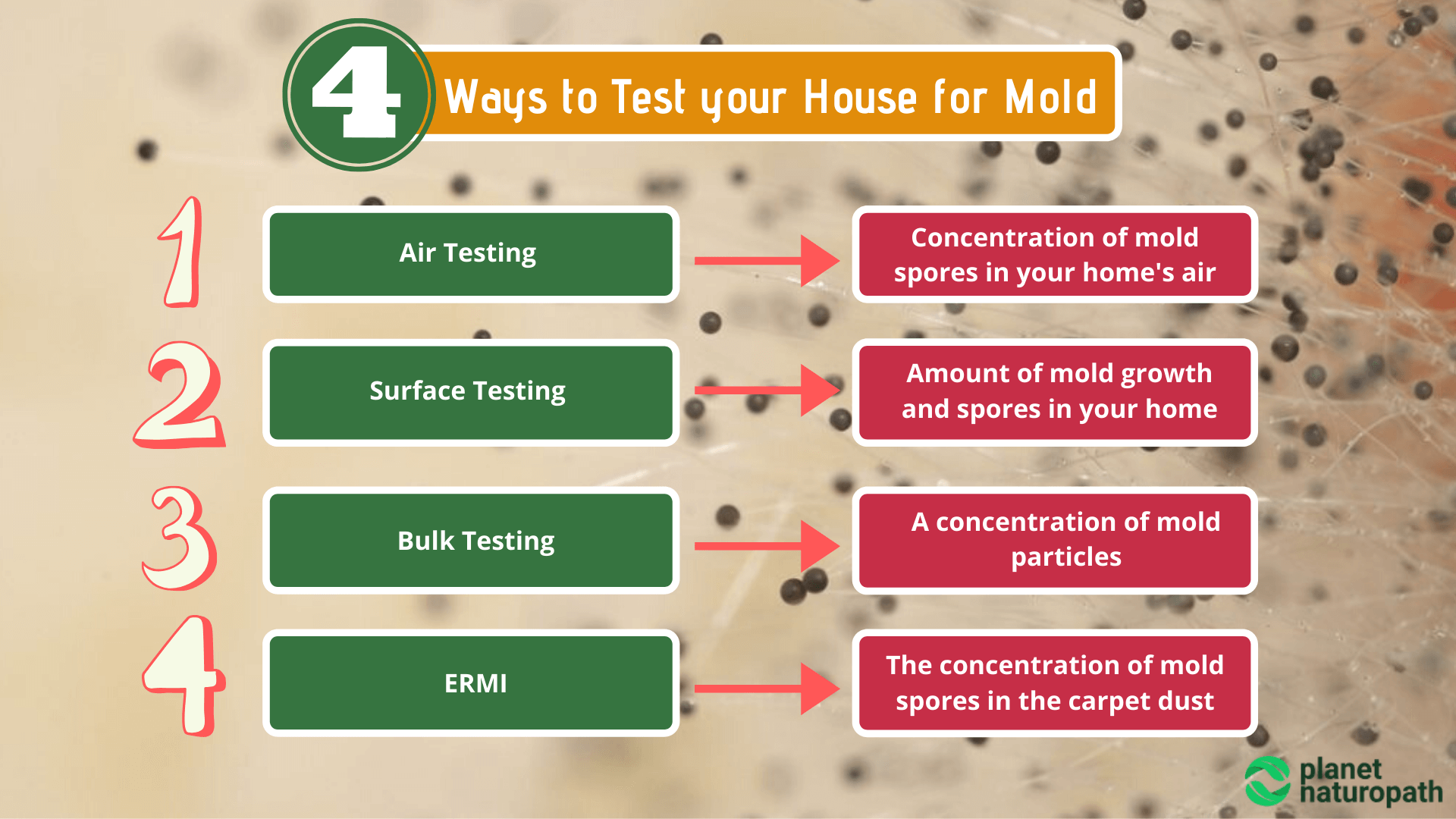4-Ways-to-Test-your-House-for-Mold
