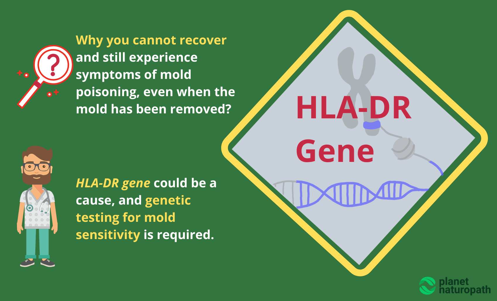 HLA-DR-Gene-Testing