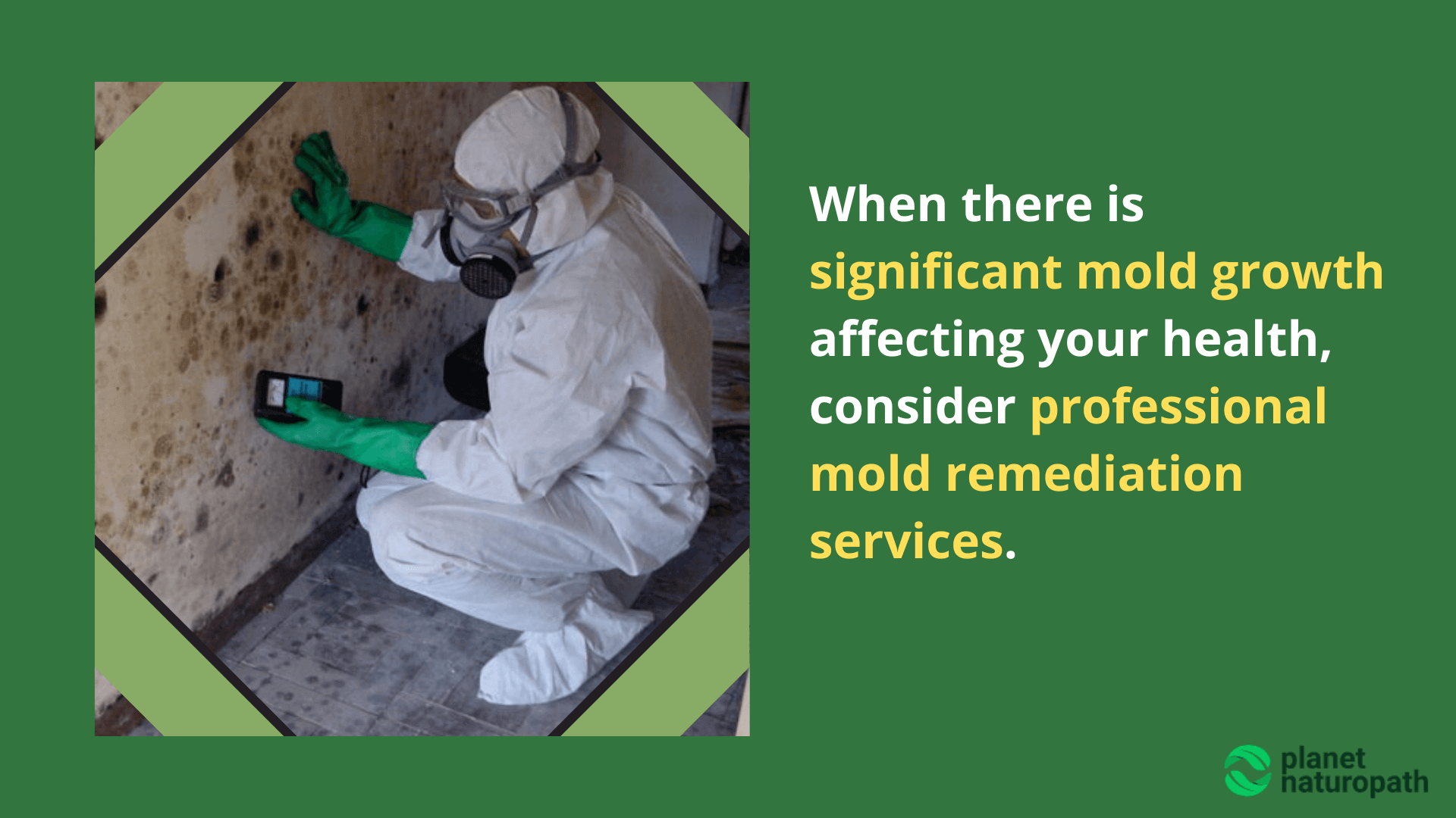 Professional-mold-remediation-services