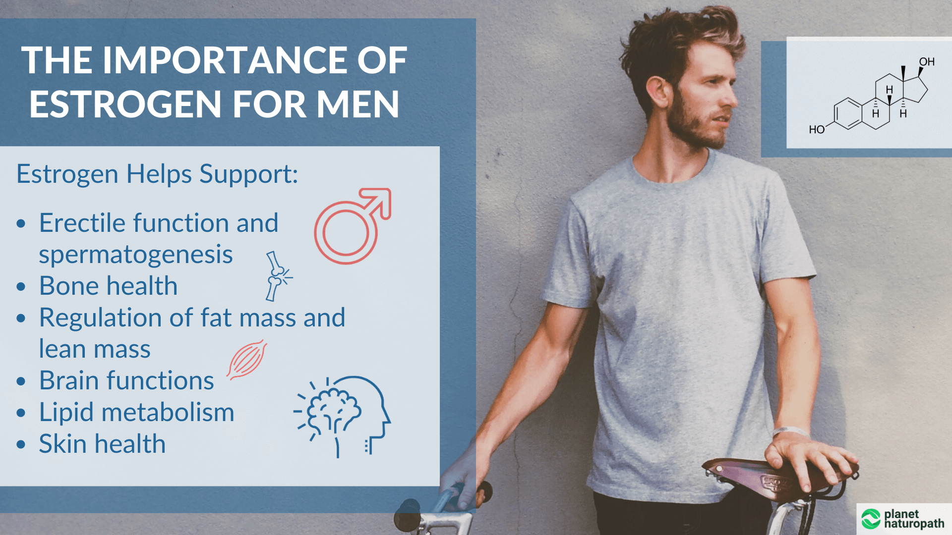 The-Importance-of-Estrogen-for-Men