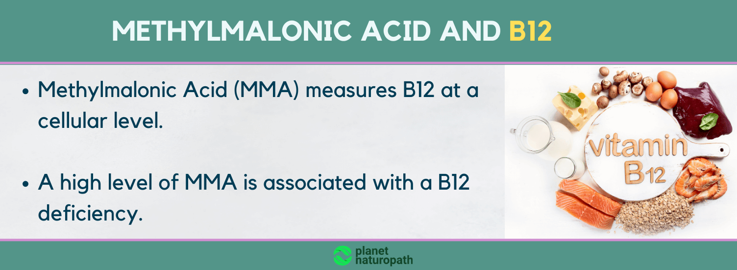 Methylmalonic-Acid-and-B12