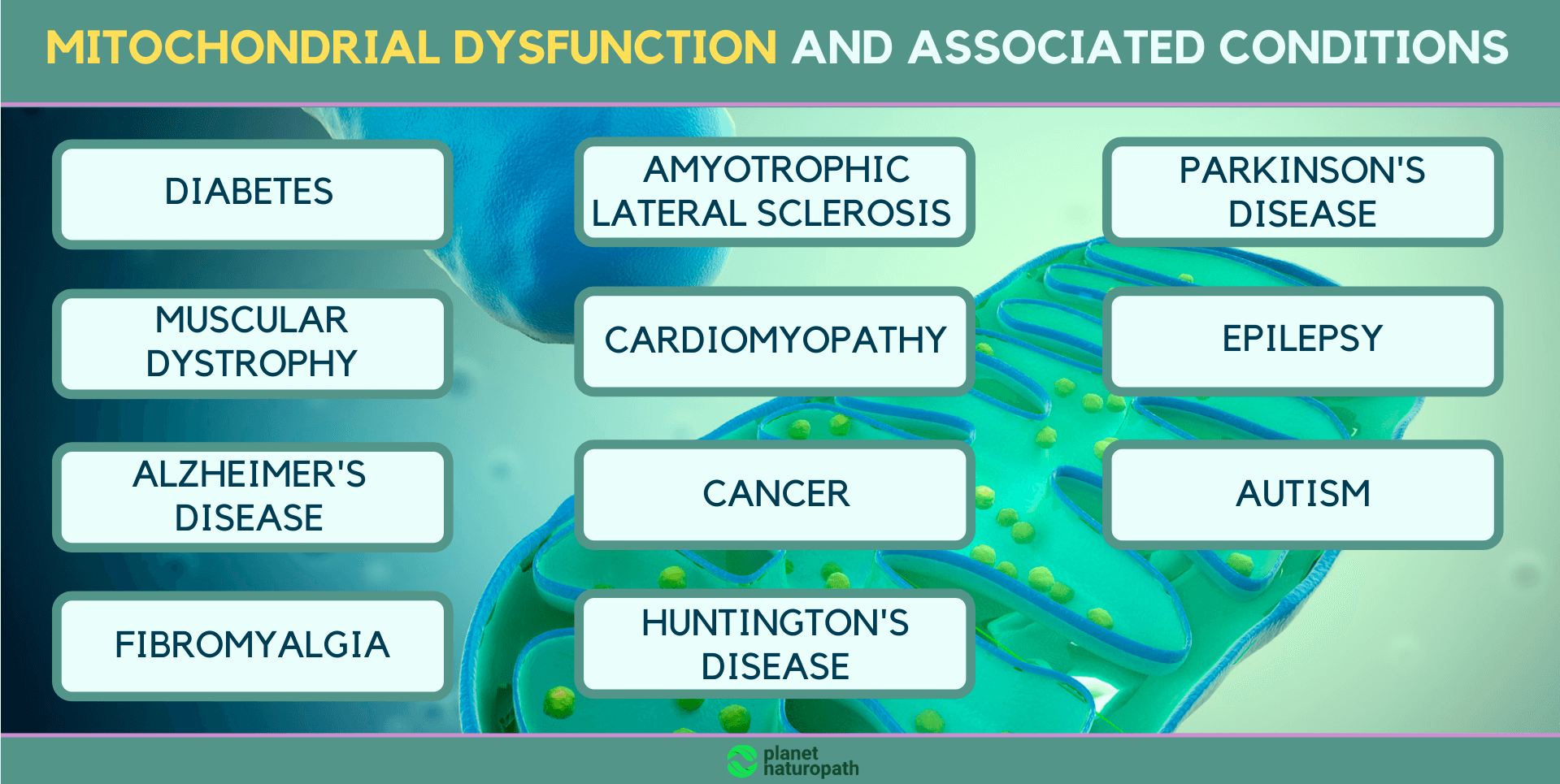 Mitochondrial-dysfunction-and-associated-conditions
