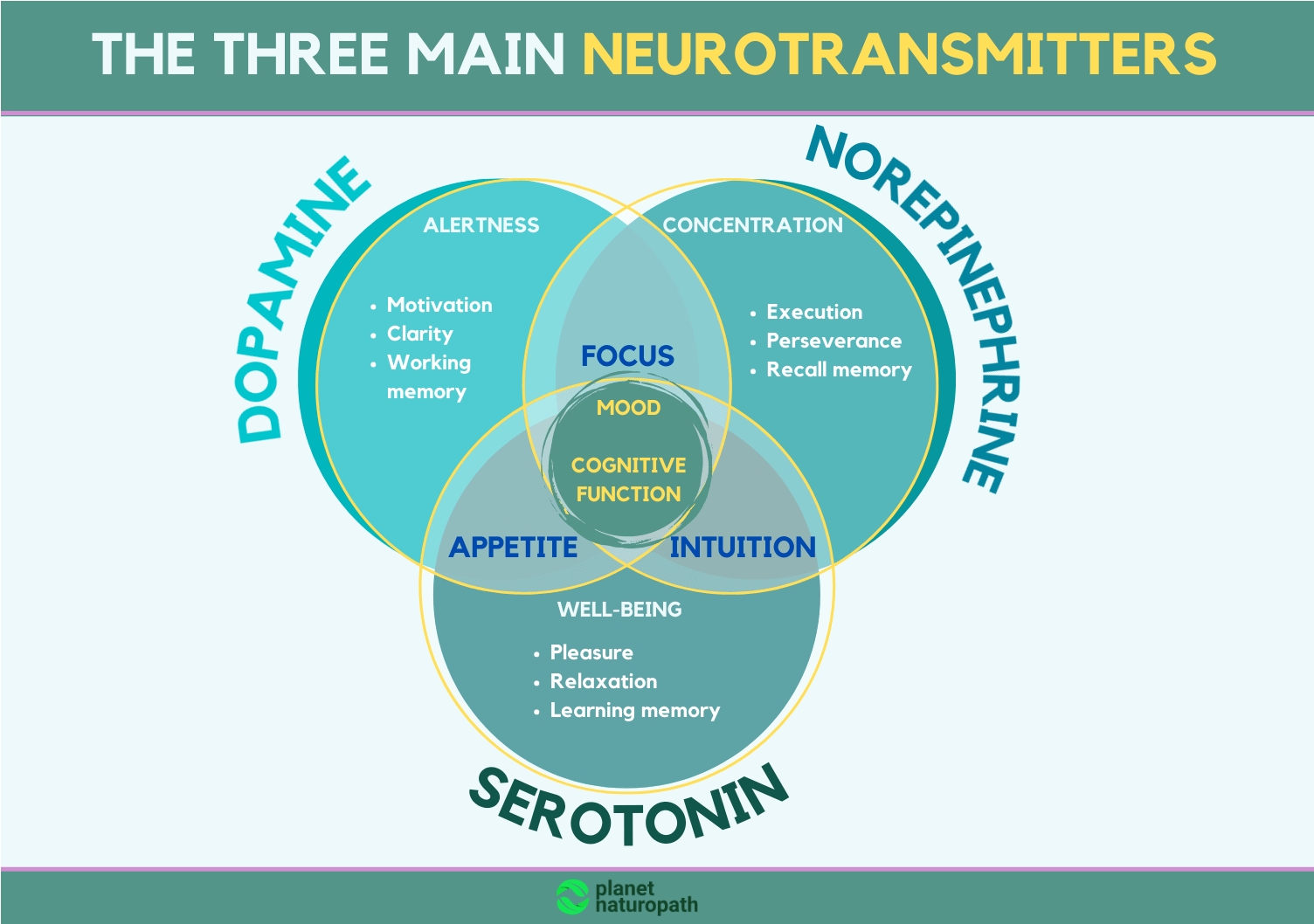 The-three-main-neurotransmitters