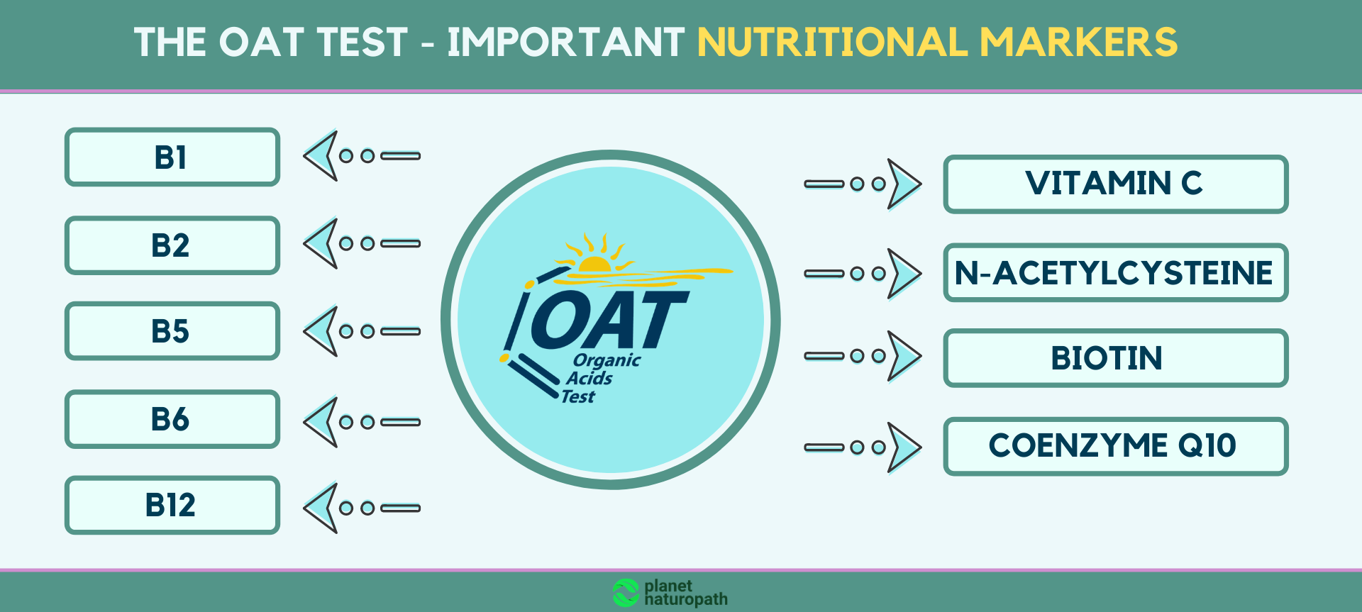 the-OAT-test-Important-nutritional-markers