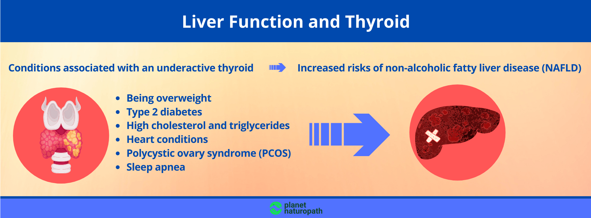 Liver Function and Thyroid
